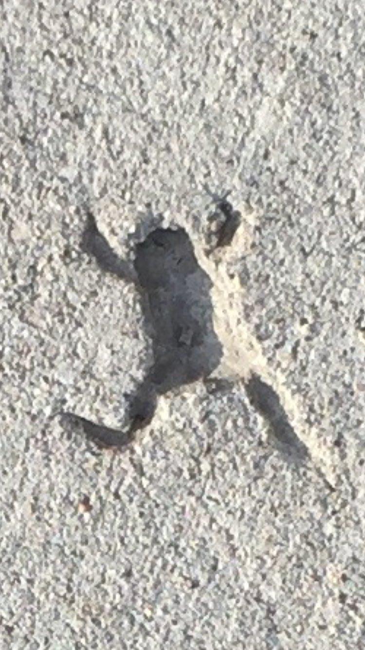 コンクリートに残ったカエルの跡(笑)