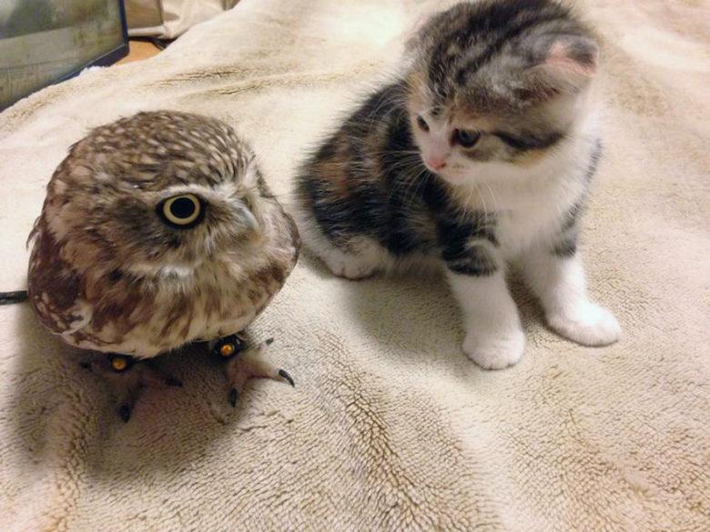 【猫とフクロウおもしろ画像】仲が良い子猫とフクロウがかわいい(笑)