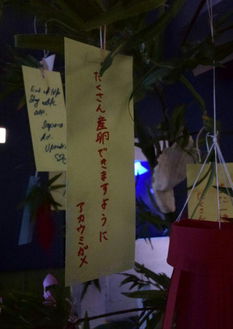 【七夕短冊おもしろ画像】アカウミガメの七夕短冊の願い事(笑)