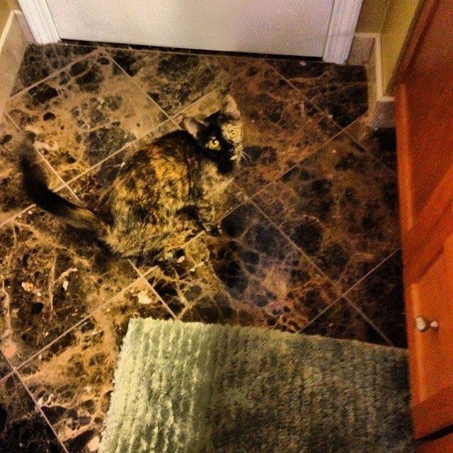 【猫おもしろ画像】タイルに同化した迷彩猫(笑)