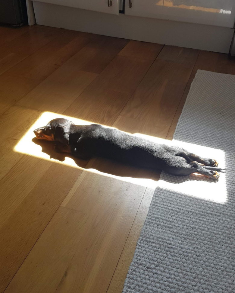 【犬おもしろ画像】日が当たる場所に収まって日光浴を楽しむ犬(笑)