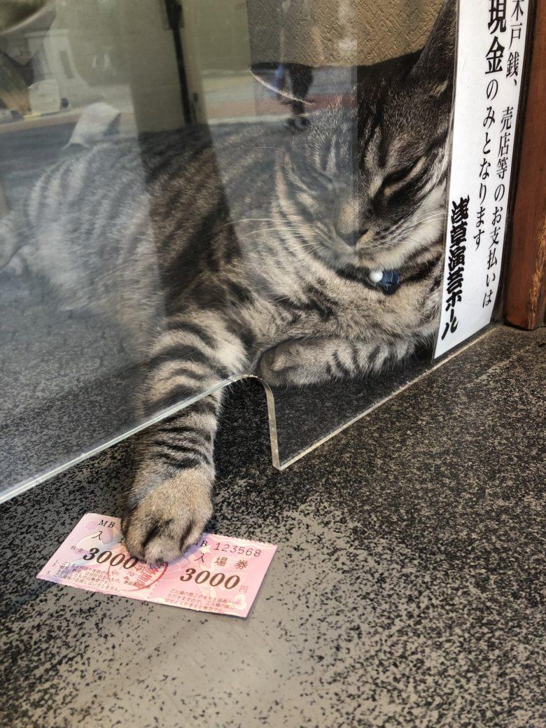 【猫おもしろ画像】浅草演芸ホールの受付でチケットをくれる猫(笑)