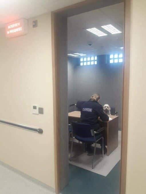 【犬おもしろ画像】警察で取り調べを受ける犬(笑)