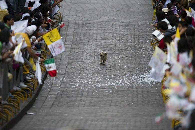 【犬おもしろ画像】犬のために開かれたパレード(笑)