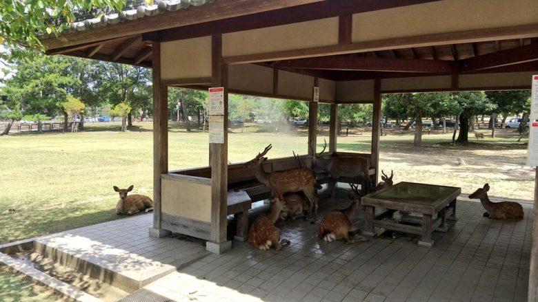 【猛暑おもしろ画像】奈良公園のミストシャワー付き東屋を占拠する鹿たち(笑)