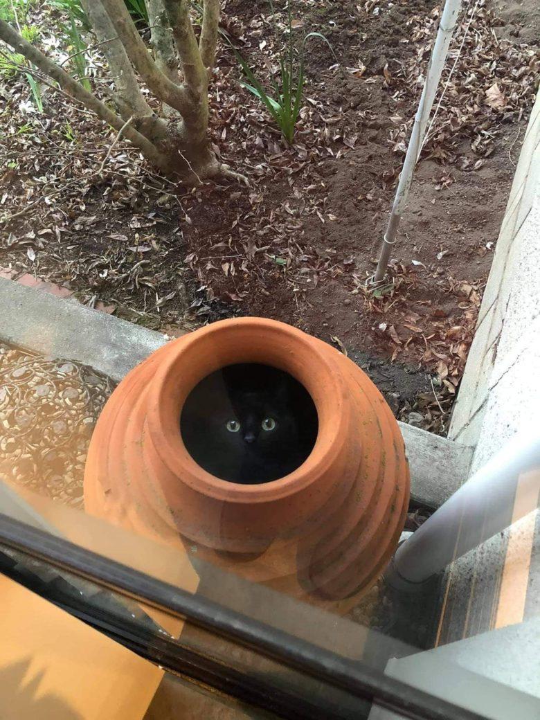 【猫おもしろ画像】壺の中からこちらを覗く2つの眼(笑)