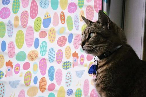 【猫おもしろ画像】窓ガラスのシールでカラフルになった猫(笑)