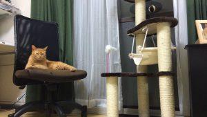 なんで? 猫にせっかくキャットタワーを買ってあげたのに遊んでくれない(笑)