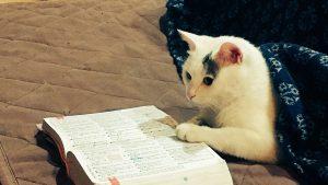 似合う! こたつから出てる猫に辞書を添えてみたら賢そうになった(笑)