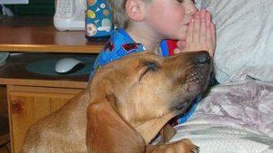 一緒に! 子どもと一緒に就寝前のお祈りをする犬がかわいい(笑)