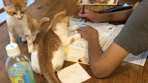 手伝うニャ? 夏休みの宿題が終わらない息子を手伝おうとする猫たち(笑)