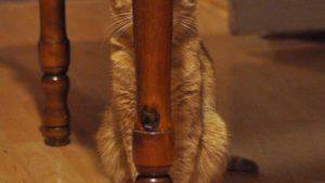 バレてるよ! テーブルの脚に隠れてるつもりだけどバレバレな猫がかわいい(笑)